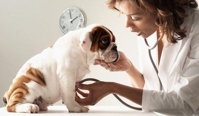 Tosse nei cani: cause, cura, rimedi e cosa fare