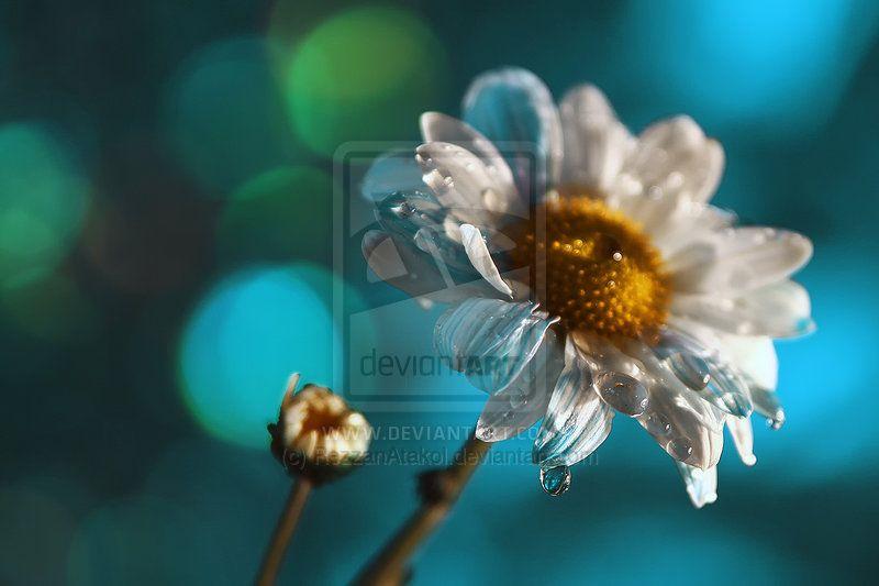 Happy birthday by `RezzanAtakol Photography / Animals, Plants & Nature / Flowers, Trees & Plants