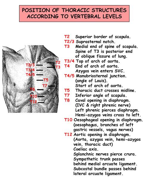 Instant Anatomy - Thorax - Vertebral Levels