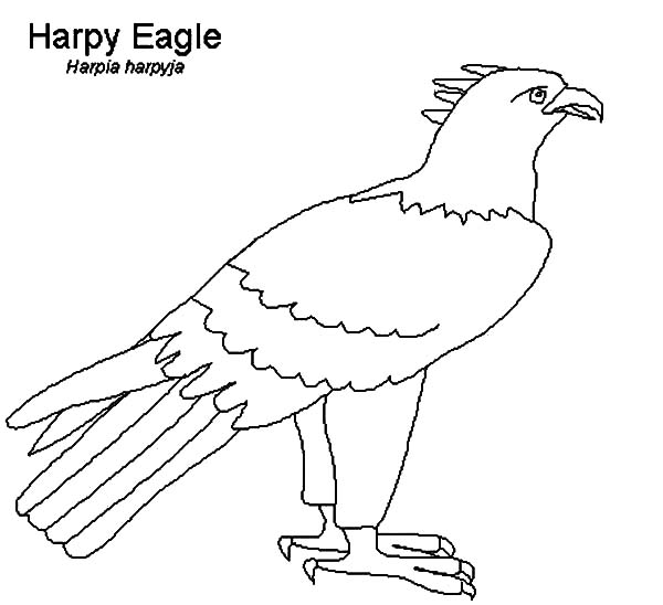 Harpy Eagle Outline Coloring Pages Coloring Sun In 2020 Eagle Outline Coloring Pages Outline