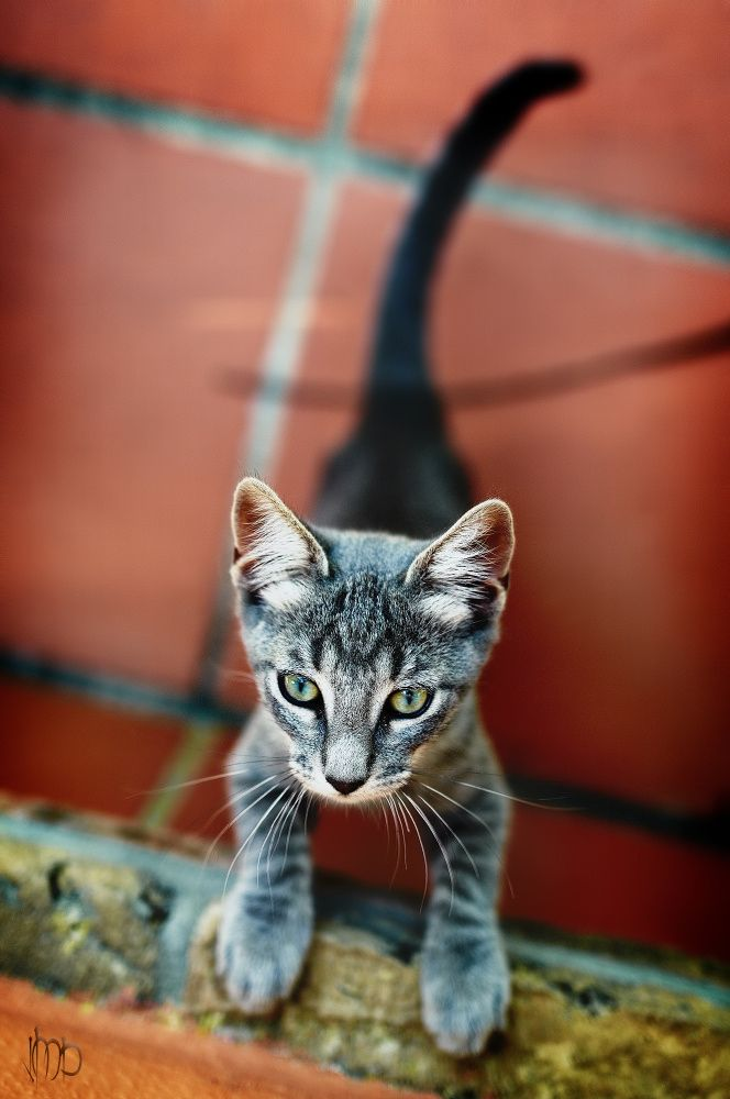 Leti's cat by Juan Doval on 500px