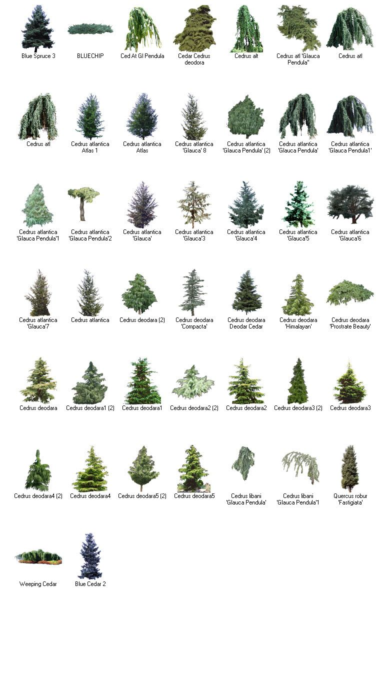 Browse Trees — Tree Guide at arborday.org