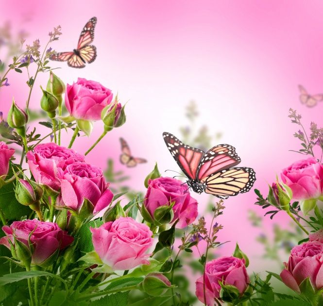 Wallpaper Roses Flowers Pink Butterflies Blossom Beautiful Flower Rose Butterfly Floral Background Flowers Beautiful Flowers