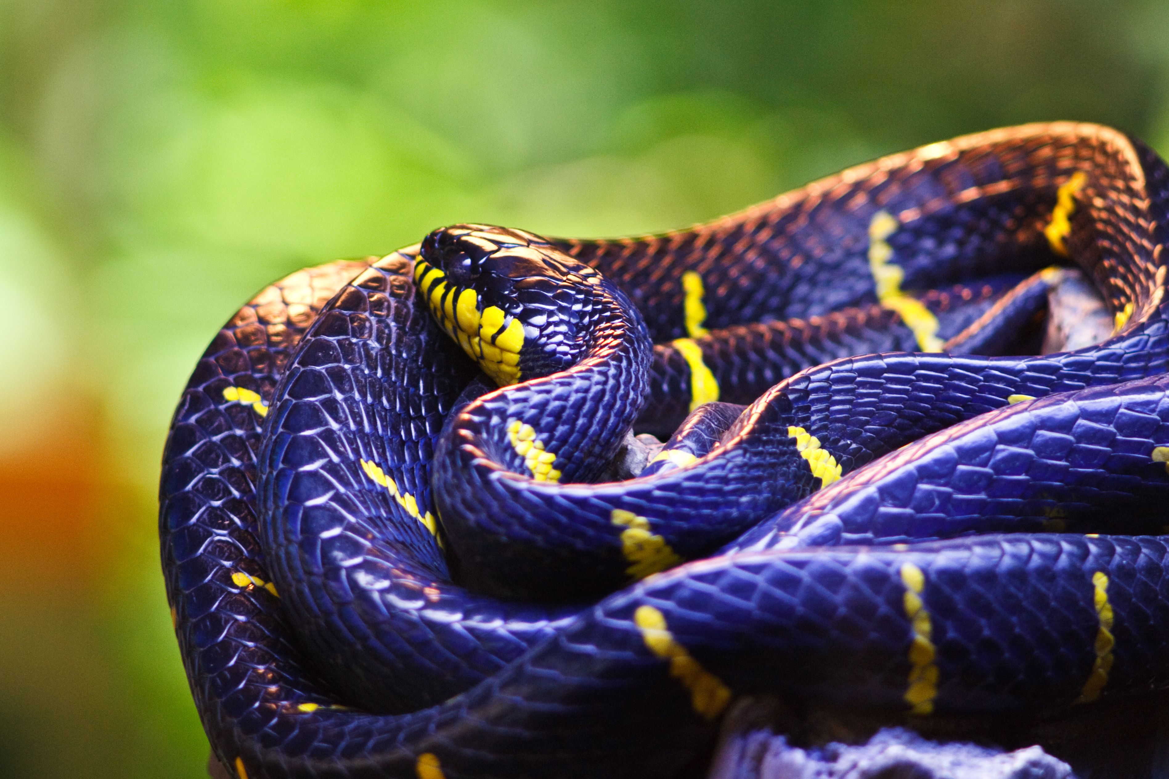 Atemberaubend Süße Schlange Färbung Seite Bilder - Malvorlagen Von ...