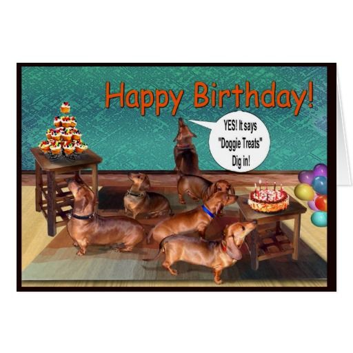 Dog Birthday Meme Funny Happy Birthday Weiner Dog Memes