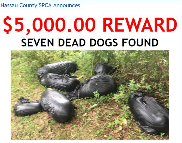 Reward offered someone dumped 7 dead dogs in bags Dead