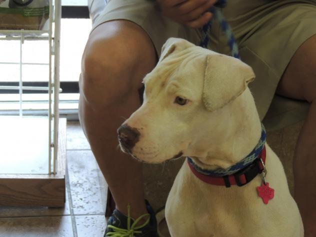 Adopt Nena On Petfinder Adoption Dog Adoption Dogs