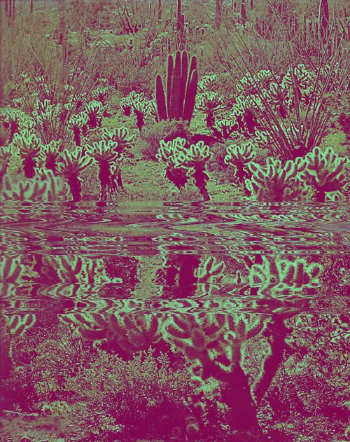 Barrayaran native flora - skellytum hands on the south continent