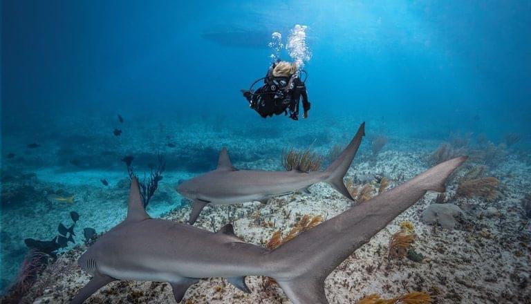 PADI Travel: Scuba Diving Travel Adventures