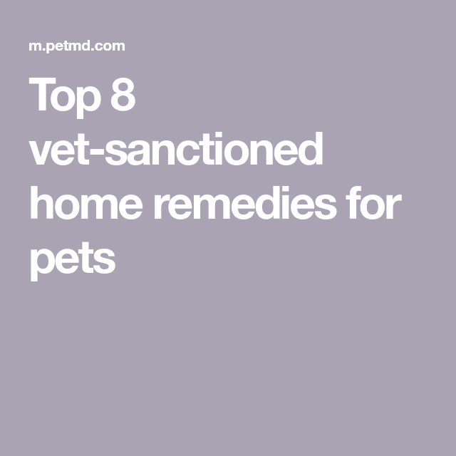 Top 8 vetsanctioned home remedies for pets Home