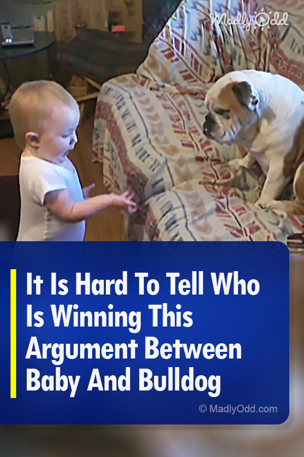 It Is Hard To Tell Who Is Winning This Argument Between Baby And Bulldog This toddler is trying desperately to make a point to this bulldog Were not sure what he is sayin...