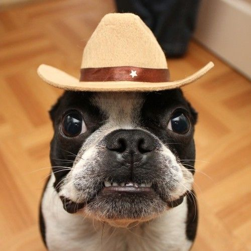 Don't you fink I make da most handsomest cowboy? You can jus' call me Wally da Kid! Git along lil' dawggie!