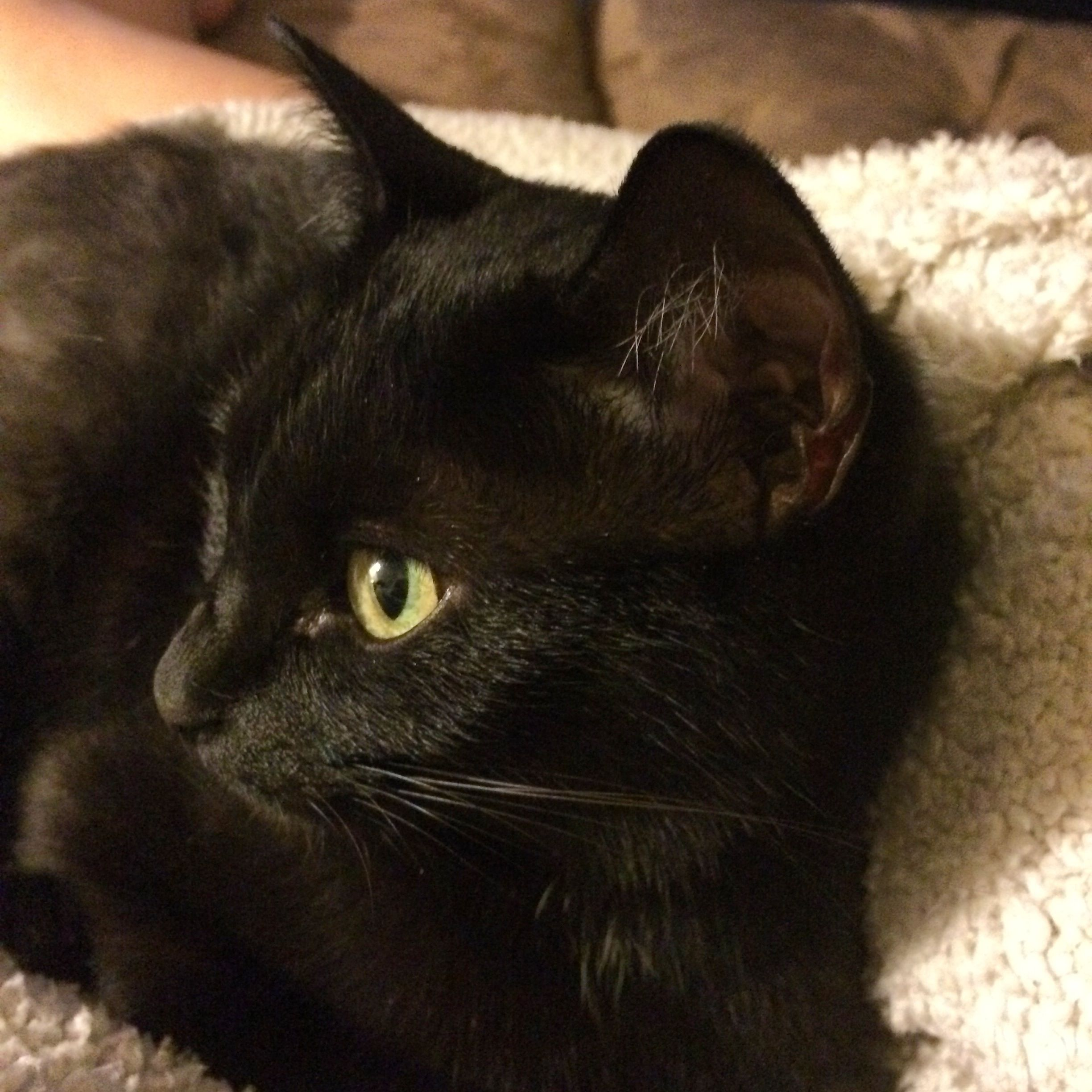 Black cats are the best!!