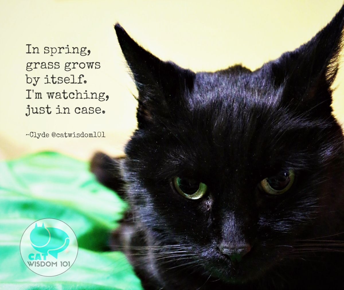 Pin On Black Cats Tell All Quotes