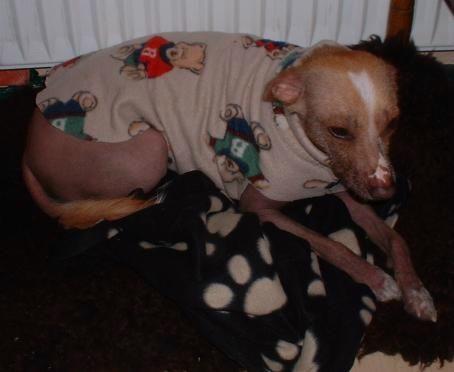 Nackthunde in Not - Schnittmuster | Nähen für Tiere | Pinterest ...