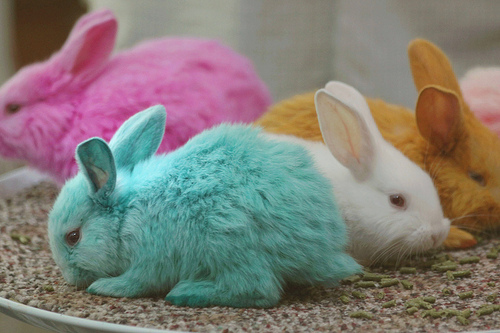 Party-Colored Bunny-fluffy-ness!