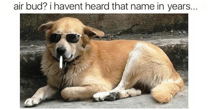 Funnydogmemes Funnydogmemes2019 Dogmemes Cutedogmemes Bestdogmemes Https Dogtreatmentpro Com P Funny Dog Memes Funny Animal Memes Funny Dog Fails