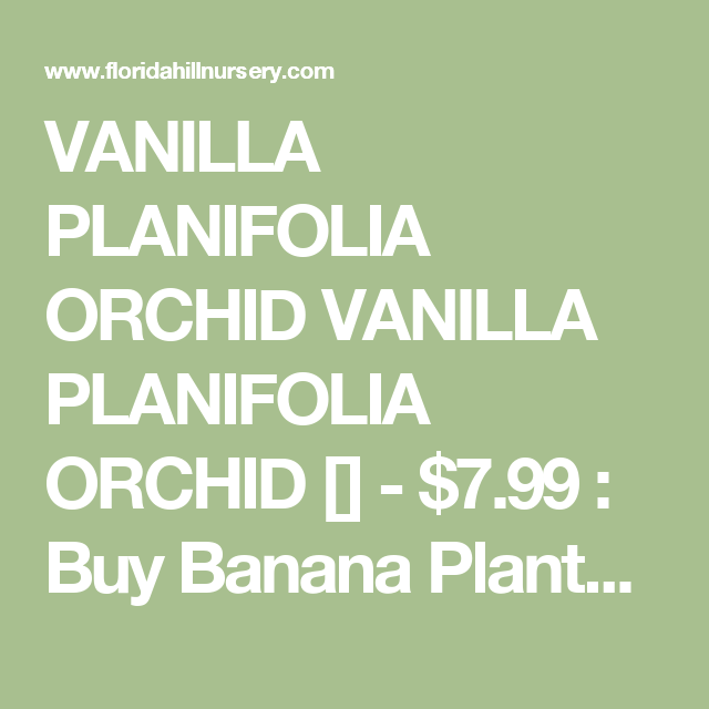 Vanilla Planifolia Orchid 7 99 Banana Plants More Tropical For Florida Hill Nursery