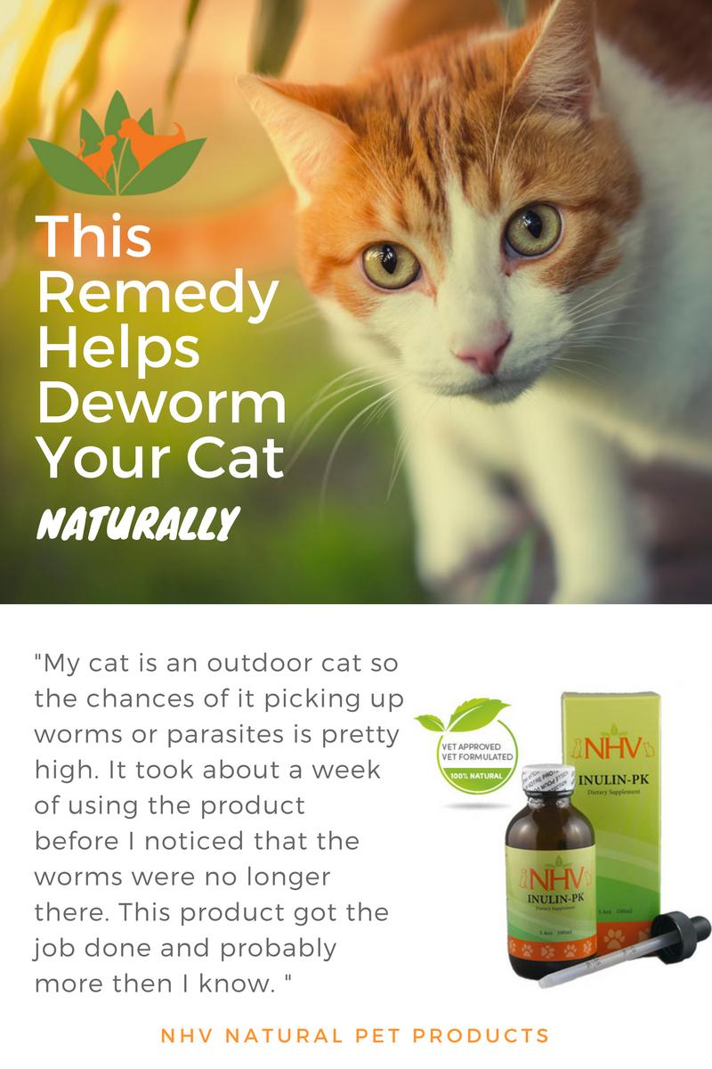 Inulin Pk For Cats Cat Medicine Cat Care Cat Dewormer