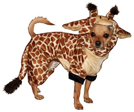 Posh Puppy Boutique Pet Costumes Cute Dog Costumes Giraffe Costume