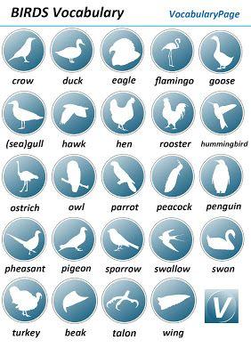 VocabularyPage                                                                                                                                                      More