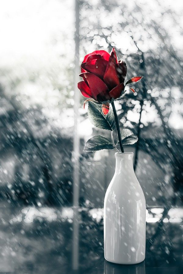 Red Roses Flower In Glass Vase By Meesri Apichart Color Splash Red Black And Red Roses Color Splash Photography