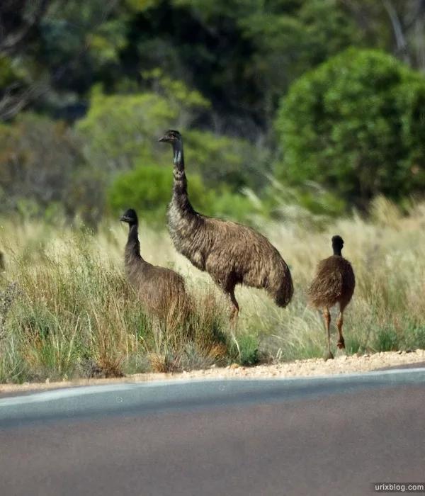 австралия животный мир необыкновенной красоты: 7 тыс ...