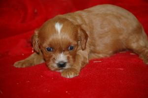 One of these three pups is soon to be mine! :)