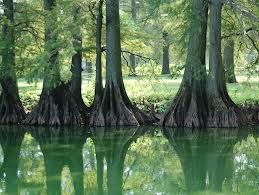 Reelfoot Lake This Lake Was Formed When The Mississippi River Ran Backwards One Time Google Search Union City Tennessee Visit Tennessee Lake