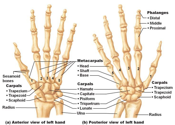 Image Result For Wrist Bones Photo Bodycare Products Pinterest