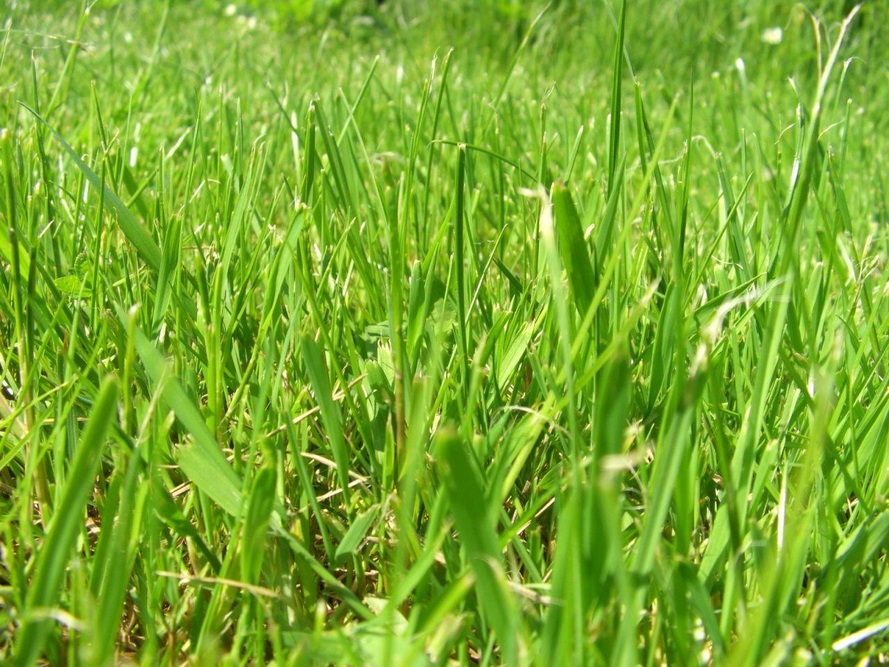 A green summer field of grass herbs field of dreams grass