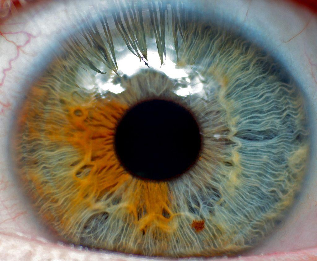My eye macro