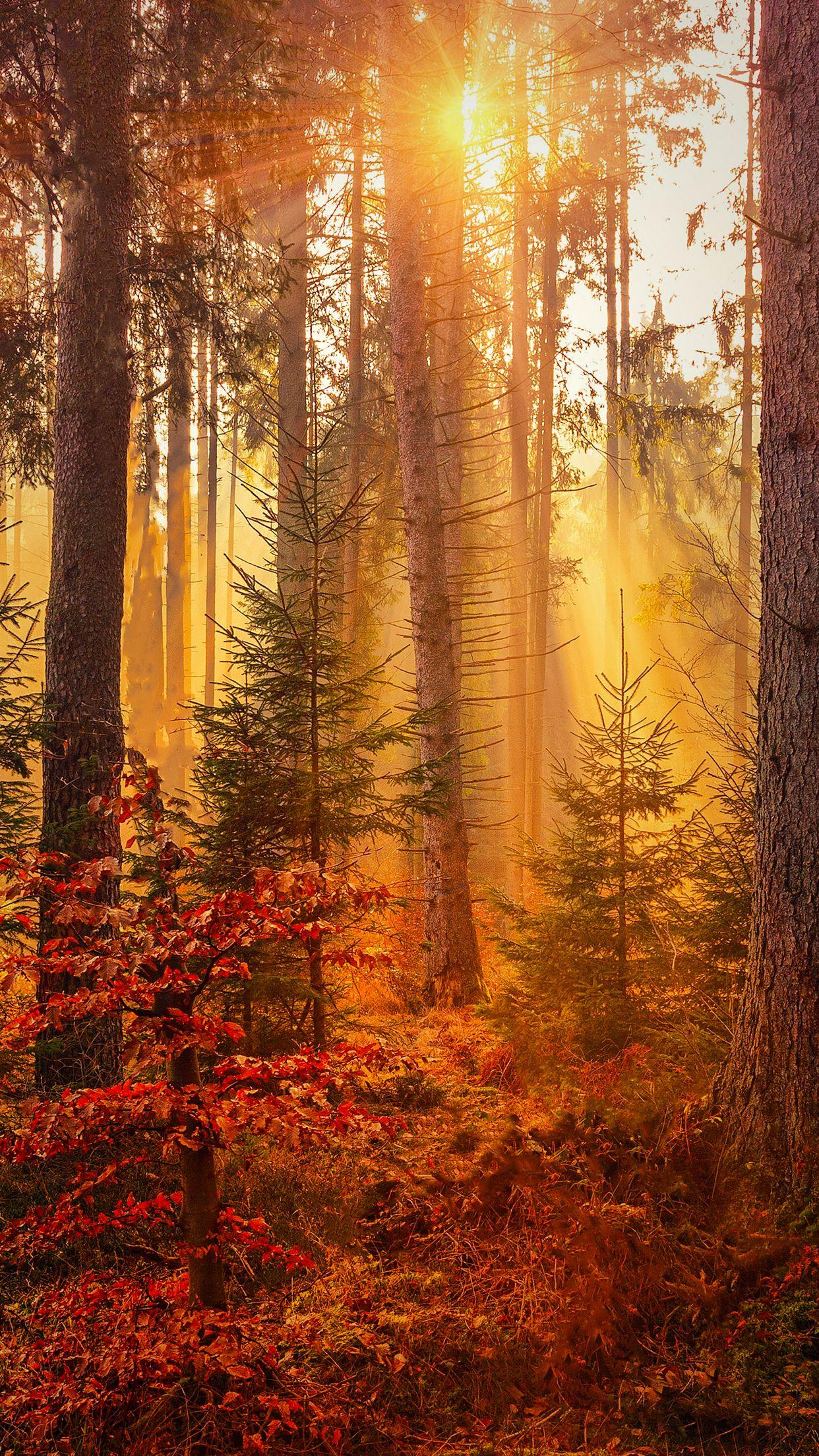Amazing HD autumn wallpaper3 iphone background