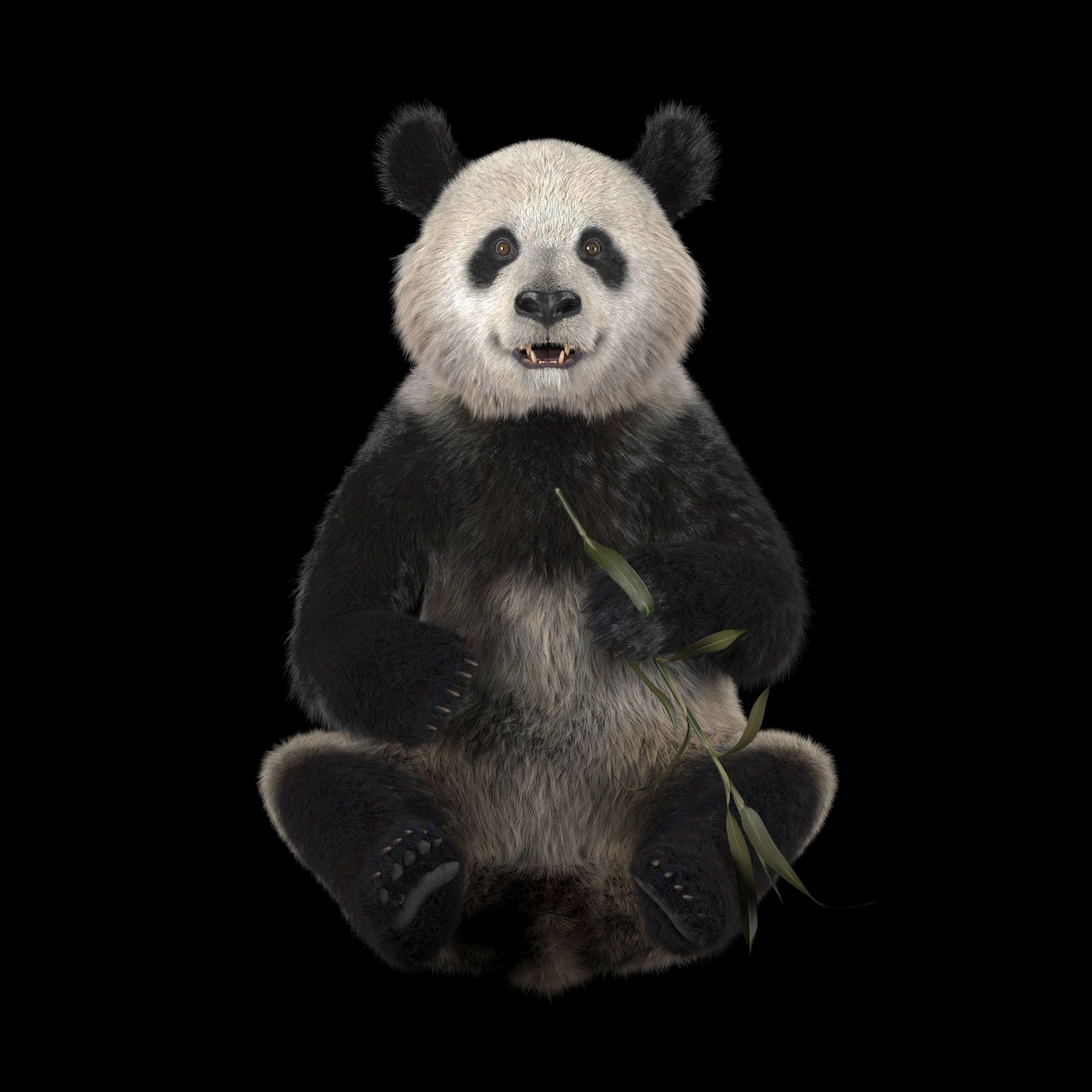 Giant Panda 3D CGTrader