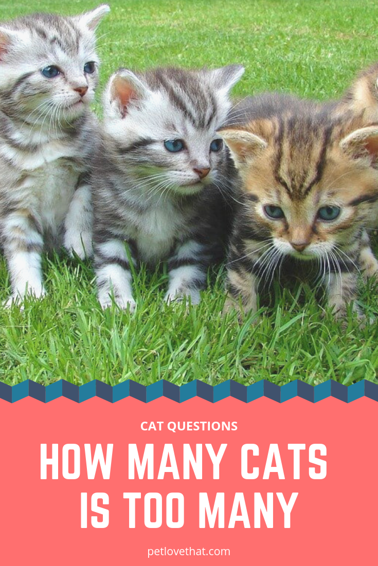 Are You An Animal Enthusiast If You Have Just Adopted A Cat And It Is Your 10th Cat You Should Read This Writing Piece We Wi Cat Questions Cats Cat Adoption