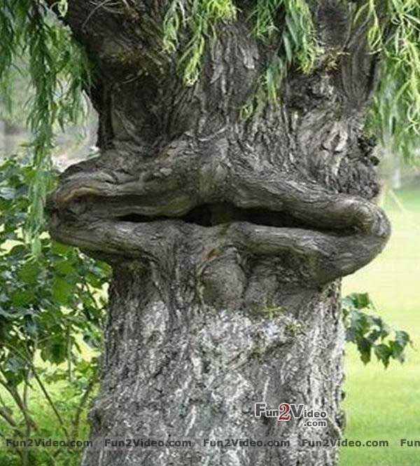Cartoon Tree With Face : A one of a kind cartoon of your dog's funny face for all to see.
