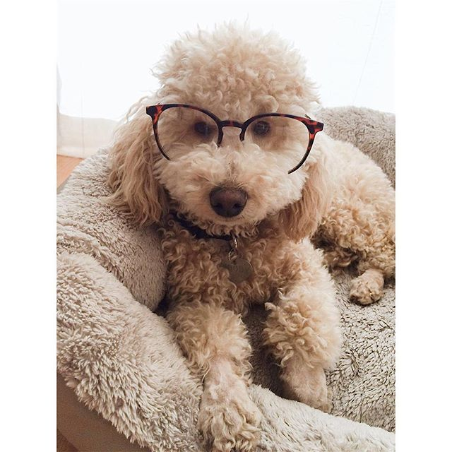 Your Pooch Doesn T Need Glasses To See Straight But Their Eyes Still Need A Little Tlc Just Like Yours Getting Dog Grooming Tips Diy Dog Stuff Dog Grooming