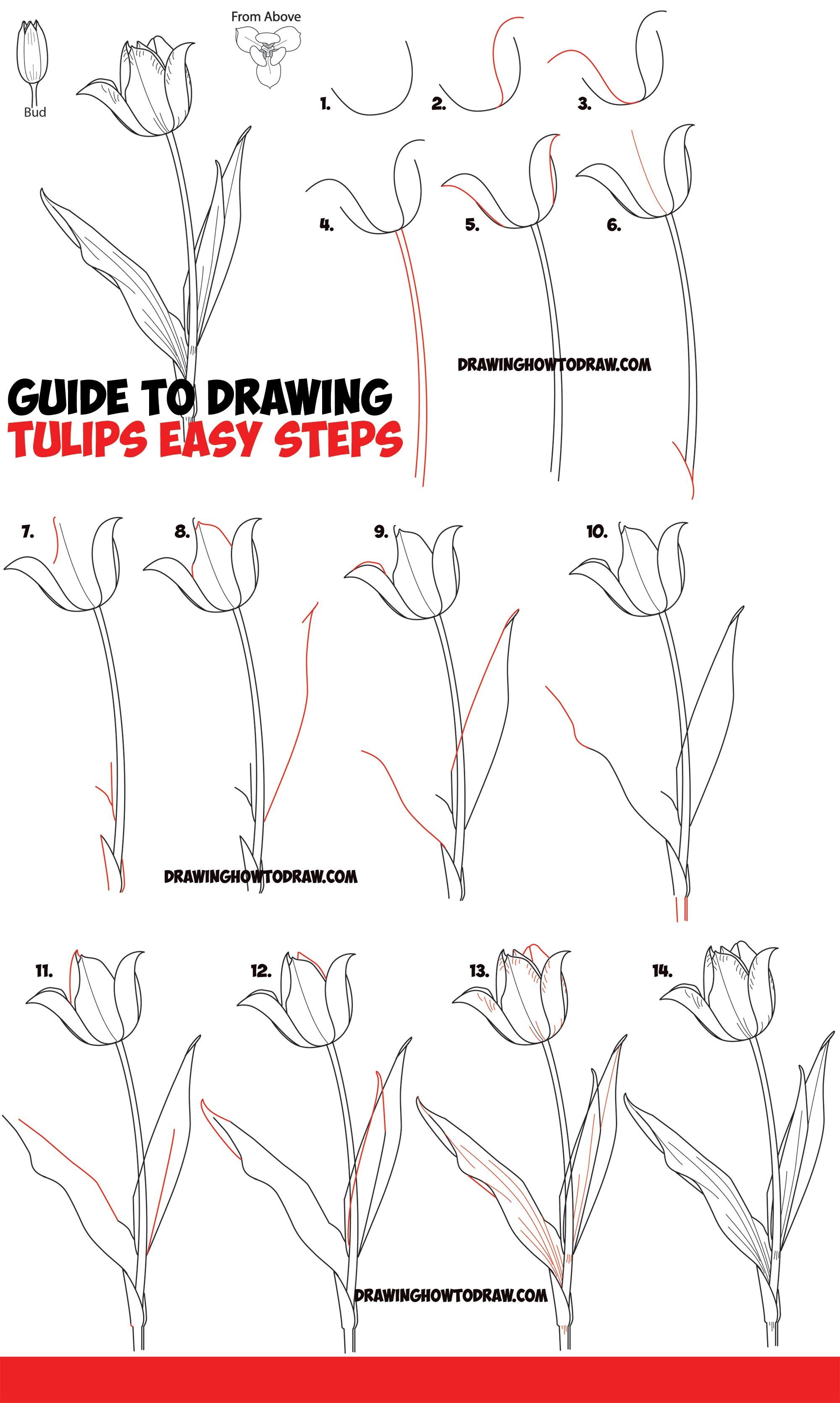 How To Draw Tulips Easy Guide To Drawing Tulips From Side From Above And As Young Buds How To Draw Step By Step Drawing Tutorials Tulip Drawing Flower Drawing