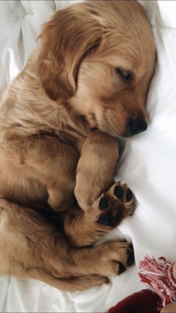 Cyrenna Puppies Cute Baby Animals Cute Animals