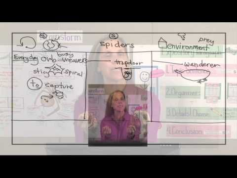 2-3 informative/Explanatory Writing Stage 5 Categories - YouTube