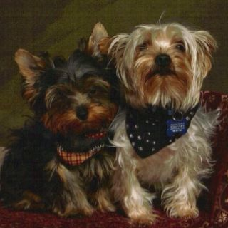 Pin By Becky Hankey On My Puppies Puppies Dogs Animals