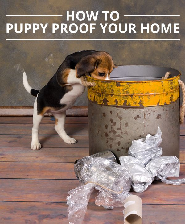 A Fool Proof Guide For Puppy Proofing Your Home Puppies Getting
