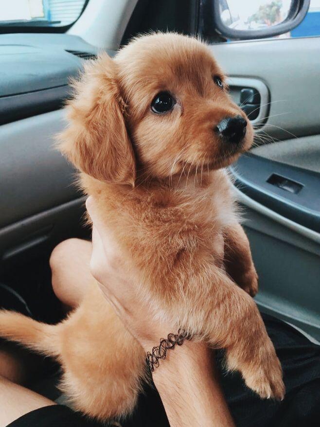 Pin Von 𝖆𝖓𝖓𝖆 Auf Cute Animals Haustiere Hunde Niedliche Welpen