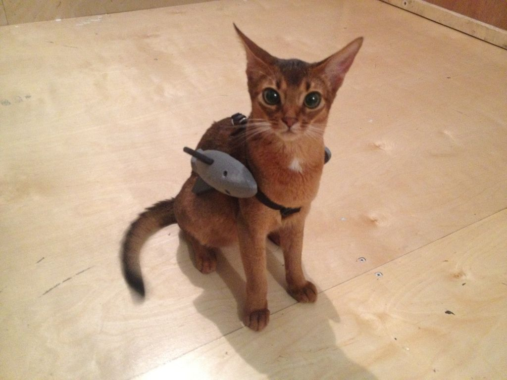 Battle Kitten Mal Eben Ein Kampfkostum Fur Die Katze Ausdrucken