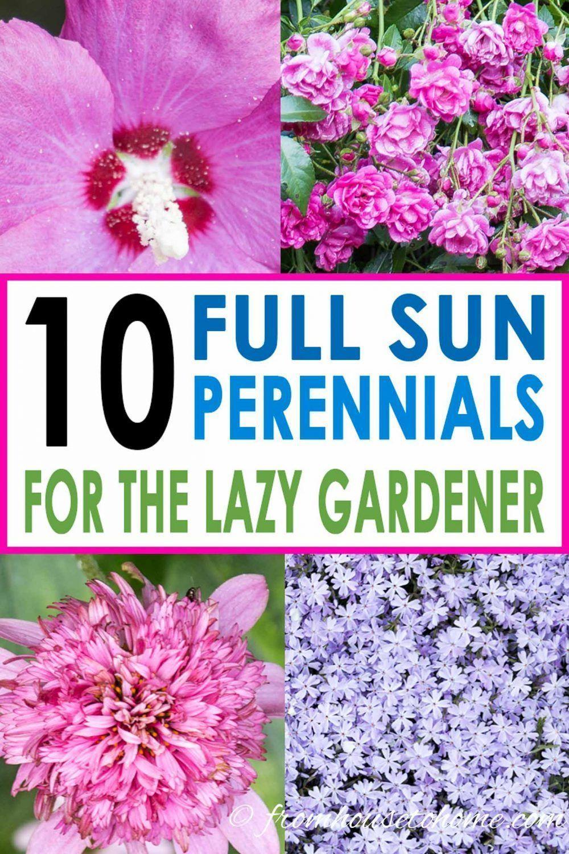 Beautiful Full Gardening Maintenance Perennials Plants Sun Thrive Full Sun Perennials 10 Beautif In 2020 Pflegeleichte Pflanzen Pflanzen Pflegeleichter Garten