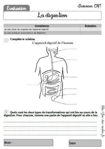 Evaluation La Digestion Cm1 Sciences Cm1 Cm1 Et Evaluation