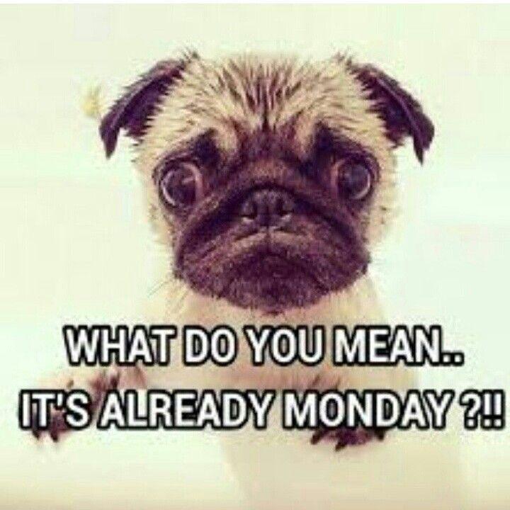 Funny Happy Monday Meme : Good morning dolls jaeluxeshoetique shoetique monday