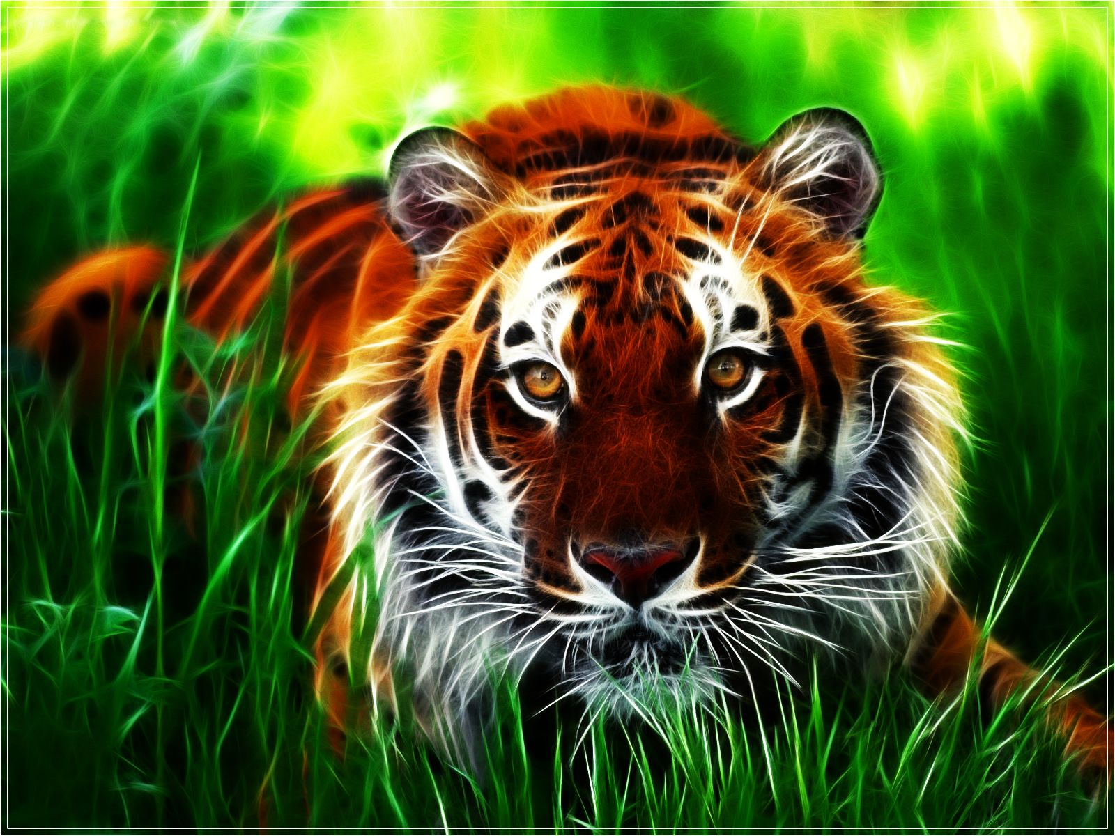 Computer Tiger Wallpapers Desktop Backgrounds Id × Tiger