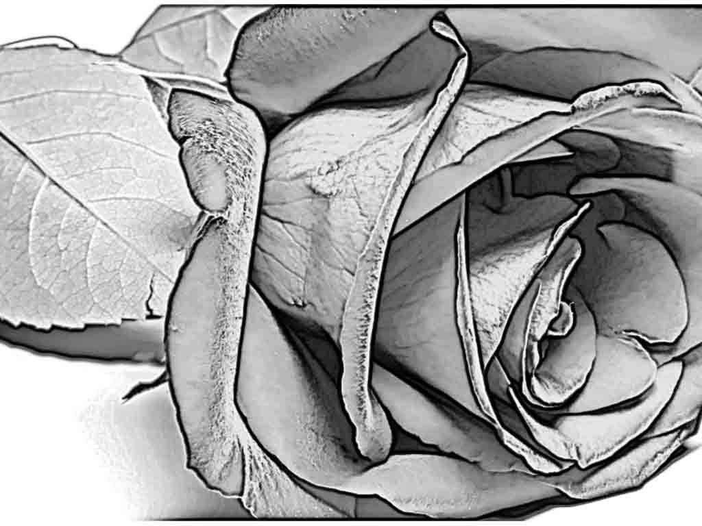 Pencil art gallery rose flowers art gallery drawing for Pencil sketch ideas