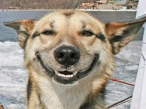 Funny Meme Smiley : Smiley dog sticker worthy faces pinterest smiley dog and animal